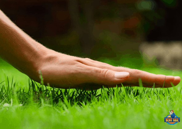 Expert Lawncare Tips For A Happy Summer Lawn